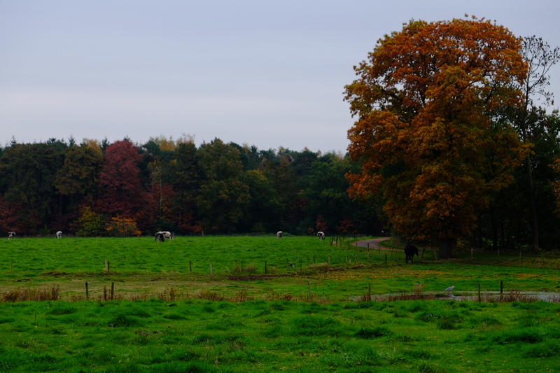 Pasture and Woodland.