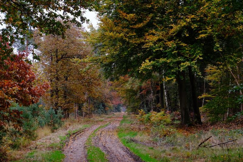 Autumn Woods.